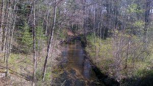 Baldwin Maine wetland stream