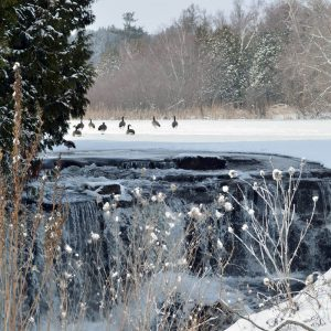 photo by Lindsay of geese on frozen pond with waterfall